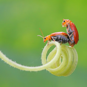 by Harie muchty arief ... - Animals Insects & Spiders