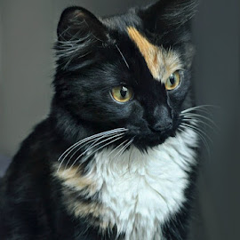k-p-portrait by B Lynn - Animals - Cats Portraits ( kitty., faces., face., kitties., shades. )