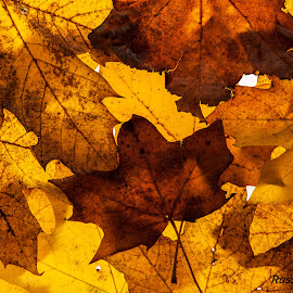 Autumn Colour by Russell Mander - Abstract Patterns