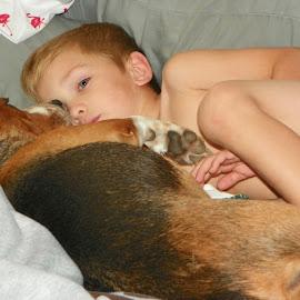Snuggling by Sandy Stevens Krassinger - Babies & Children Children Candids ( child, snuggling, beagle, dog, boy )