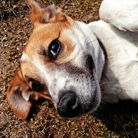 by Jana Kubínová - Animals - Dogs Portraits