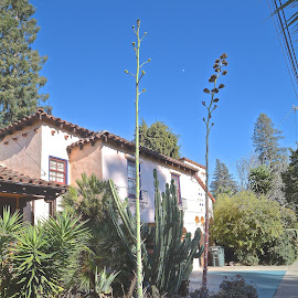 by Victoria Eversole - Buildings & Architecture Homes ( spanish homes, southwestern style, california lifestyle )