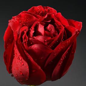 by Zaza Rubio - Nature Up Close Flowers - 2011-2013