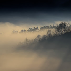 Fog and rays by Comsa Bogdan - Landscapes Weather ( mountains, gorgeous, fog, comsa_bogdan, beautiful, nice, trees, weather, romania, rays, brasov )