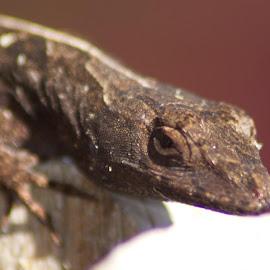 by Raymond Monk - Animals Reptiles