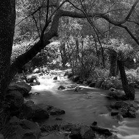 Trees and river by Cristobal Garciaferro Rubio - Landscapes Forests ( water, trees, pwcbwlandscapes, leaves, rocks, branches, river )