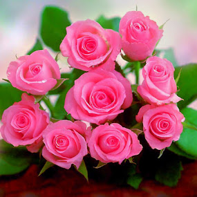 Pink Roses by Benz Otiniano - Novices Only Flowers & Plants
