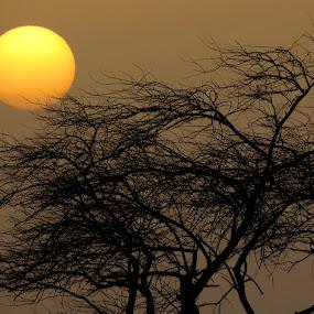 sunset by Yahia  husain - Landscapes Sunsets & Sunrises ( tree, awesome, sunsets, sunset, beautiful, lovely, beauty, stunning )