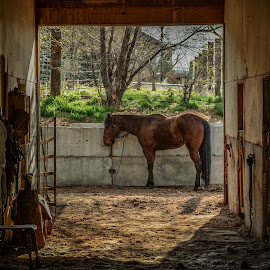 Horse Barn by Aaron Steele - Animals Horses