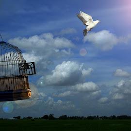 The Divine Destination of Life !  by Debasis Banerjee - Digital Art Things