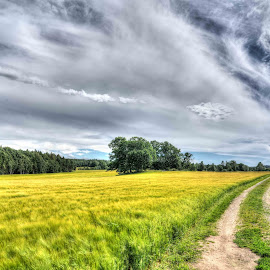 Rygge Norway by Dirk Rosin - Landscapes Prairies, Meadows & Fields ( landskap, norwegen, landschaft, østfold, norge, rygge, norway )