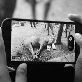 Smartphone by Helmi Nugraha - Instagram & Mobile Android ( cow, candid, bnw, natural, photography )