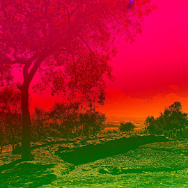 by Sandra Cid - Landscapes Prairies, Meadows & Fields