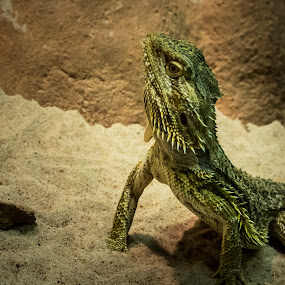 by Mia Iversen - Animals Reptiles