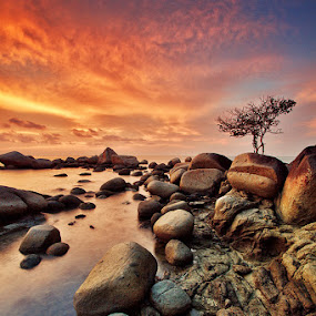 Sturdy Tree by Bobby Bong - Landscapes Waterscapes ( tree, sunset, dramatic, rock, alone )