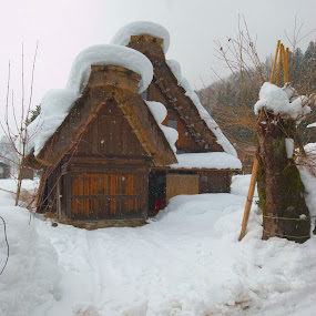 shirakawago by Kamal Kamaludin - Buildings & Architecture Public & Historical ( shirakawago japan countryside a-frame world heritage asia house tourist attraction building tradition farmhouse traditional culture village history architecture tree paysage east ancient snow japanese sum rice retro construction face nature wood house life )