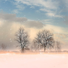 Bare Branches by Sandra Hilton Wagner - Landscapes Weather ( clouds, sky, winter, beautiful, snow, weather, trees, snowflake, landscape, branches,  )