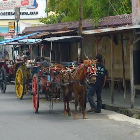 Dokar(traditional Indonesian horse-cart) by Wayne Duplessis - Animals Horses ( temple, vacation, ancient, yogyakarta, indonesia, horse, java )