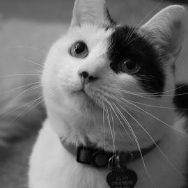 by Michelle Stewart - Animals - Cats Portraits