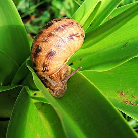 by Aida Kavazovic - Nature Up Close Gardens & Produce
