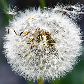 weed seeds by LADOCKi Elvira - Nature Up Close Gardens & Produce