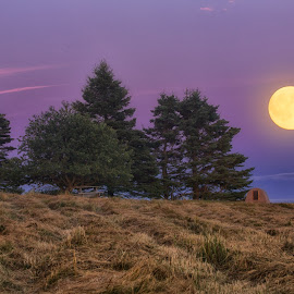 Moonlight Glow by Kelley Hurwitz Ahr - Landscapes Prairies, Meadows & Fields ( maine 2016 )