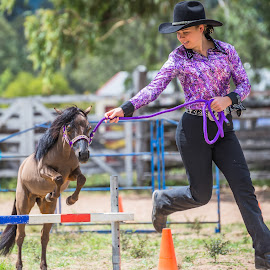 Miniature Horse Jumping by Sarah Sullivan - Novices Only Sports