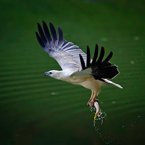 by Stanley Chan - Animals Birds