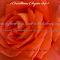pink rose from obrv.jpg