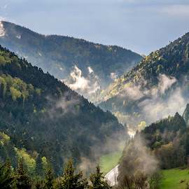 Black forest in Germany by Linda Brueckmann - Landscapes Forests