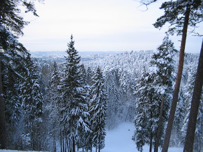 Winter landscape in Sapiegine