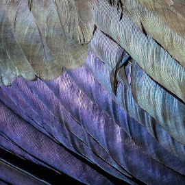 Feathers of an Ibis by Dirk Luus - Abstract Patterns ( abstract, glossy, feathers )