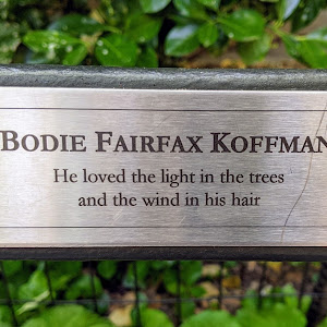 BODIE FAIRFAX KOFFMAN He loved the light in the trees and the wind in his hair   Submitted by @lampbane