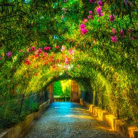 Alhamra's botanical Arch park by Syarif Rohimi - City,  Street & Park  Amusement Parks