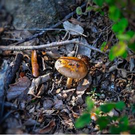 Hola ¡¡ by Jose Maria Vidal Sanz - Nature Up Close Mushrooms & Fungi ( mushroom, nature up close )