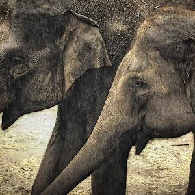 Bonded by Amanda Daly - Novices Only Wildlife (  )