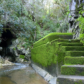 Green stairs by Gil Reis - Landscapes Waterscapes ( water, nature, travel, places, rivers,  )