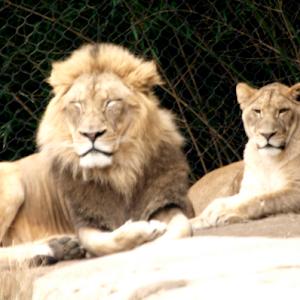 November 27,2015 Zoo E30 22720151127_135805227.jpg