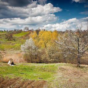 Magura by Eduard Moise - Landscapes Travel ( clouds, green. flower. flora, landscape )