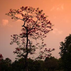 Magical nature by Avanish Dureha - Nature Up Close Trees & Bushes ( dpc, historic delhi, new delhi, dureha@gmail.com, incredible india, india, avanish dureha )
