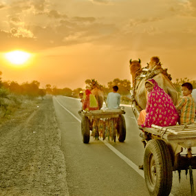 Into the Sun by Adityendra Solanki - Transportation Other ( nikon d3100, rajasthan, cameal cart, adityendra solanki's photography, camels, india, road, adityendra solanki, people, nikkor 35mm afs dx )