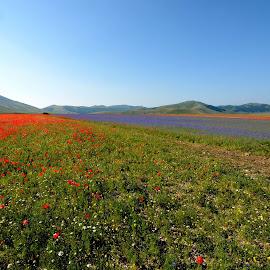 Castelluccio 2 by Bruno Brunetti - Landscapes Prairies, Meadows & Fields ( colors, flowers, italy, castelluccio, fields,  )