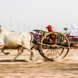 Ox cart race in Cambodia by Vorn Sovichea - Sports & Fitness Other Sports
