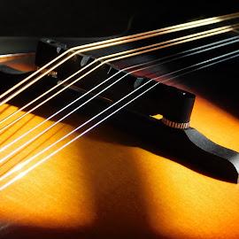 Mandolin 2 by Lisa Chilton - Abstract Macro