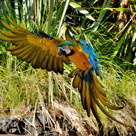 In flight  by Zhenya Philip - Animals Birds