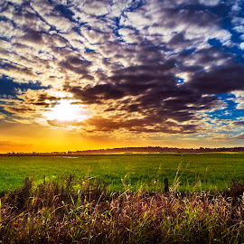 Rural Sunset. Qld. Australia by Rob Crutcher Snr - Landscapes Sunsets & Sunrises ( setting sun, color, green fields, sunset, crops, rural )