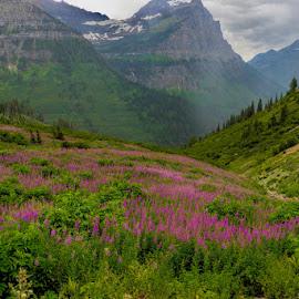 Glacier Meadow by Jim Buckley - Landscapes Prairies, Meadows & Fields (  )