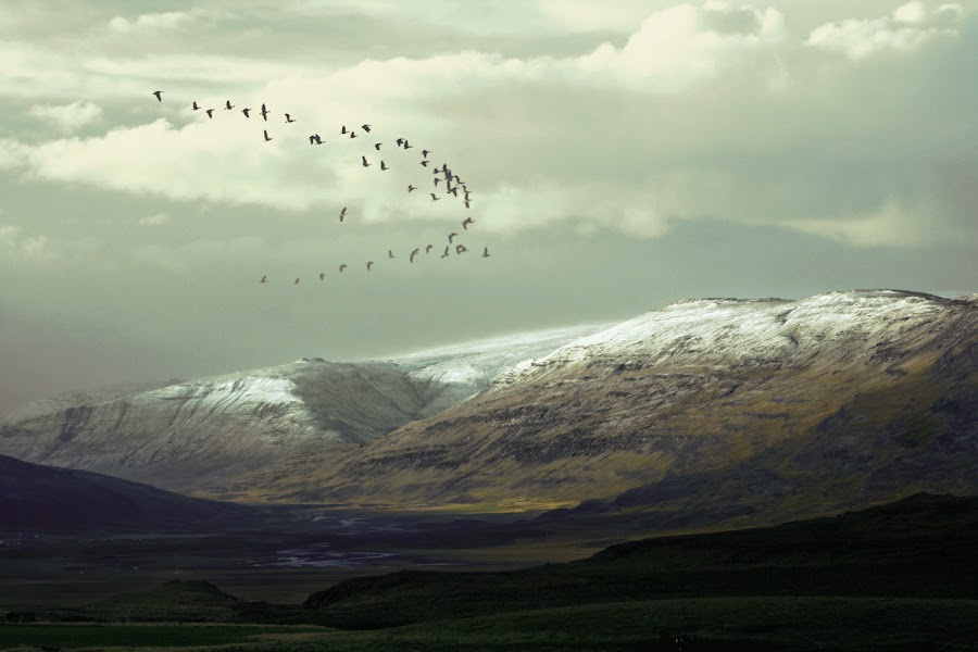 Autumn in west Iceland. by Kristján Karlsson - Landscapes Mountains & Hills ( animals in motion, geese, pwc76, motion, animal )