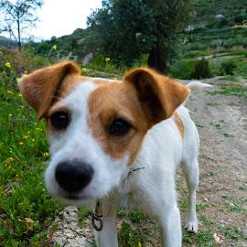 Cute Dog by Luke Albright - Animals - Dogs Portraits ( puppy, nature, animal, dog, pet )