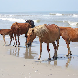 by Brian Ashcraft - Animals Horses ( fla vac 10 )